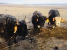 Menschen, Umwelt und Tiere in Tibet :: Menschen, Umwelt und Tiere in Tibet